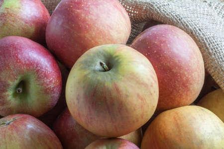 bicolored: Bicolored apple on burlap