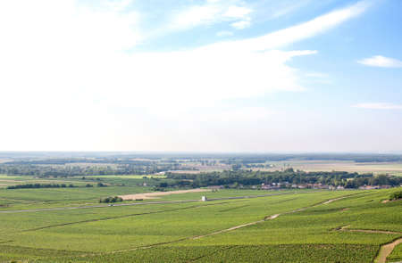 vineyard plain: Vineyard in the region of Beaune, Cote dor, Burgundy, France