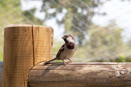 barrier: Sparrow on a barrier pos