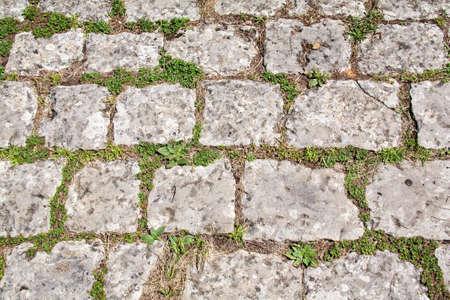 piso piedra: LHE en un terreno cubierto de hierba Foto de archivo