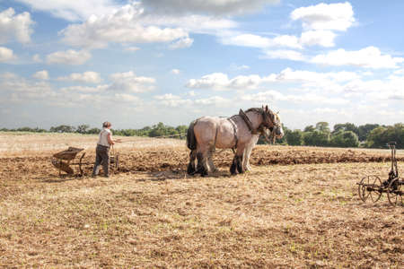 Horses percheron and plowman in the fields