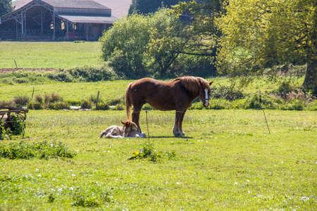 robustness: Fish and foal strokes Breton Stock Photo