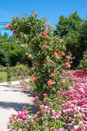 Rainbow of roses in a public garden Imagens