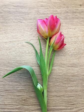 Tulpen auf einem hölzernen Hintergrund. Flora, Gartenarbeit und Pflanzenkonzept - Nahaufnahme von Tulpenblumen auf Holztisch.