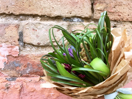Hyacinths in crafting pack on Brick wall background.
