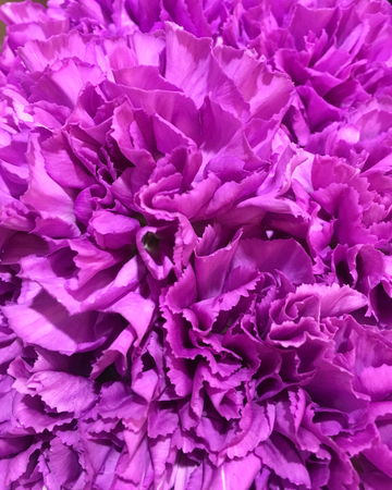 pink carnationon flowers background. Many pink carnationon in bunch. 스톡 콘텐츠