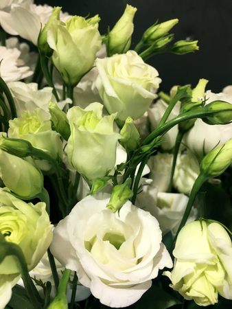 Lisianthus, Eustoma. White flowers on dark texture background