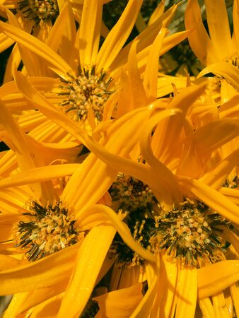 Orange flower on black background. Yellow flowers isolated. Stok Fotoğraf