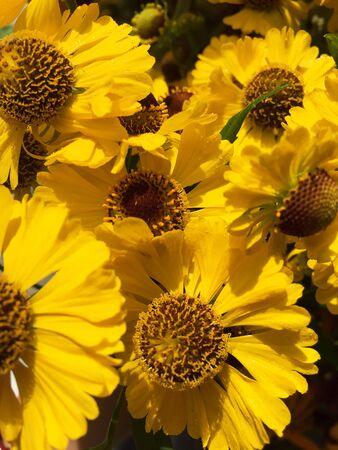 Orange flower on black background. Yellow flowers isolated. Stock Photo