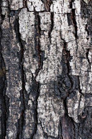 textures: textures of wood Stock Photo
