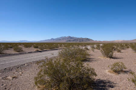 Road in Nevada desert with green bushes Stock Photo