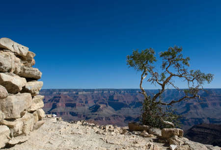Green tree in the Grand Canyon over blue sky