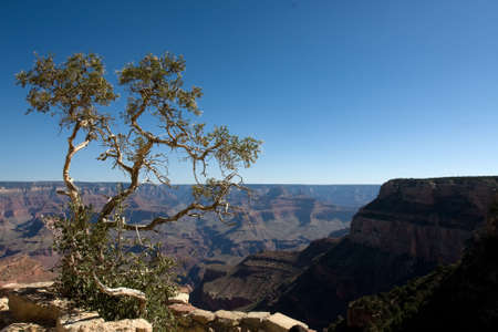 Green tree on the Grand Canyon over blue sky