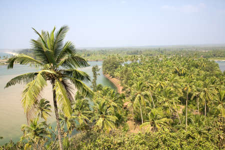 Green palms over blue sky and river in India Stock Photo