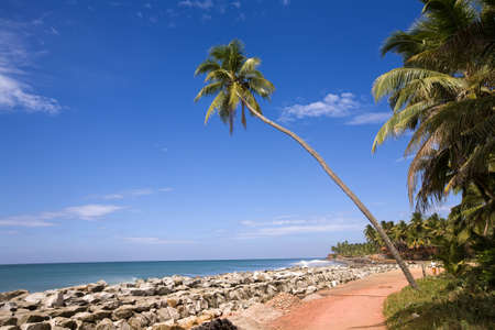 Green palm on the beach in India, Kerala over ocean and blue sky photo