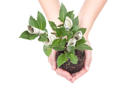Money tree Stock Photo - 11373916