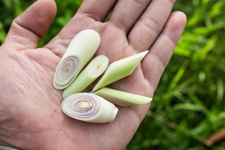 lemon grass: Lemon grass slices on a man hand