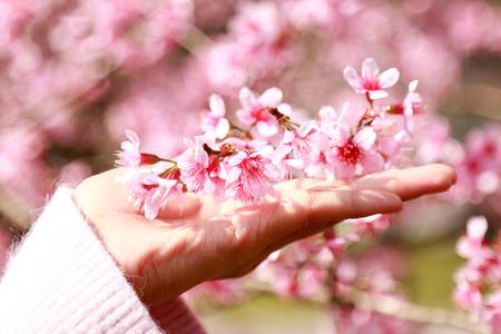 Hand touching pink flower in winter season