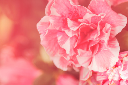 Pink flower in red tone