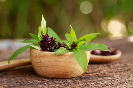 sweet basil leaf on wooden bowl 版權商用圖片
