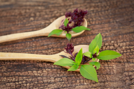 Sweet basil on wooden table spoon