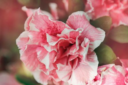 pink flower on tree in vintage tone 版權商用圖片