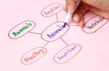 Escritura a mano colorido mapeo mental en la actividad de aprendizaje