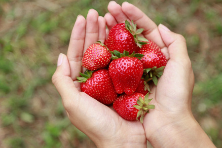 Hand holding strawberry for healthy eating 版權商用圖片
