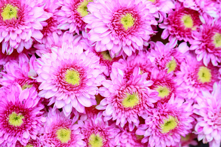 Top view of colorful flower for create background