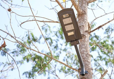 solar cell lamp stuck on tree in daylight time