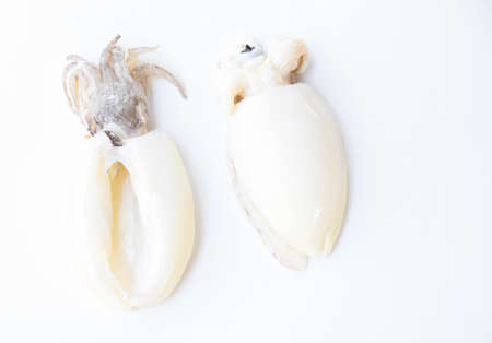 raw fresh squid on white background Reklamní fotografie