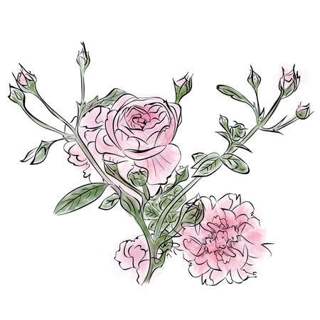 Vintage watercolor rose on a white background.