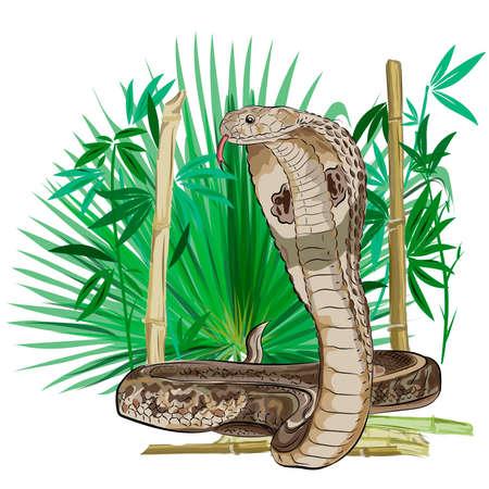 Cobra serpente nella giungla verde. Stile del tatuaggio orientale. Vettore.