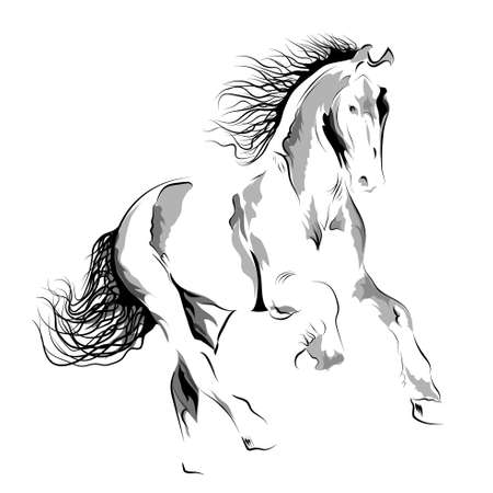 Silhouette of a running horse. Vector