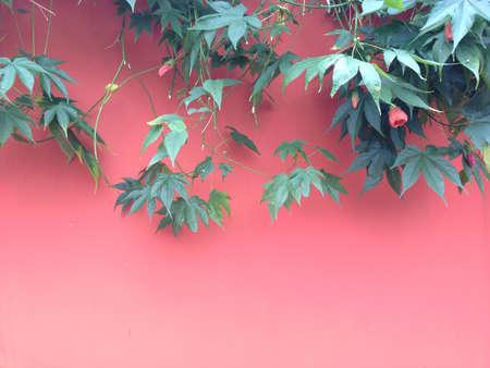 graden: Ivy in graden