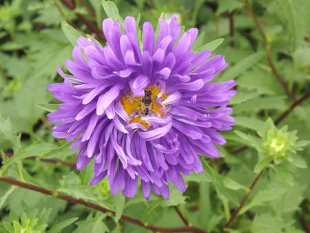 Close up view of a purple flower with a bee