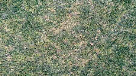 Green Grass Texture Made from 4K drone of real surface on the park