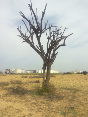 This photo shows the loneliness . Only a one tree in whole area because of loneliness going to die Standard-Bild