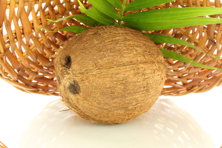 coconut in bamboo background photo