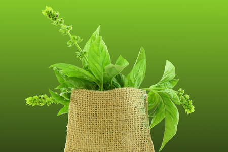 botanical remedy: basil herb in jute bag in green background Stock Photo