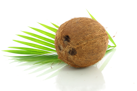 coconut with leaves closeup photo