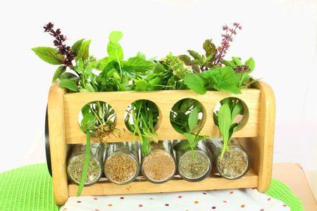 dry and fresh variety herbs photo