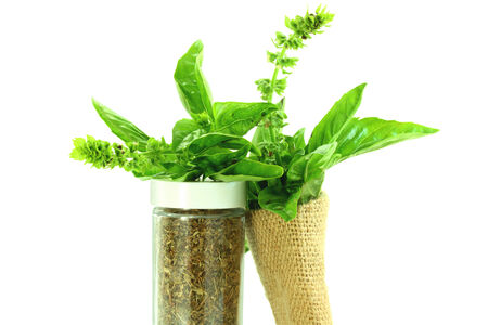 botanical remedy: dry and fresh basil herb