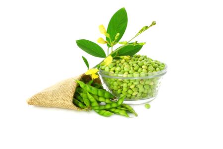 pigeon peas with leaves  写真素材