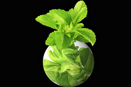 stevia herb on go green globe in black background photo