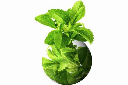 stevia herb on go green globe in white background photo
