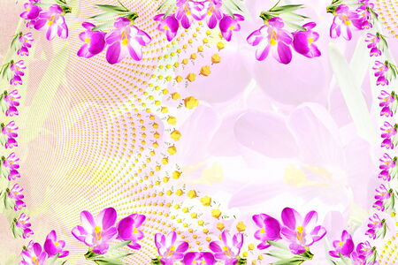 pink crocus spring flower texture background Standard-Bild