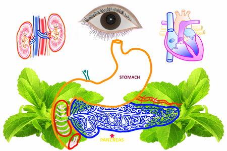 diabetes gerelateerde pictogram met maag alvleesklier hart oog nieren en steviakruid Stockfoto