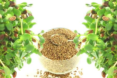 flax seed: flax seed whole and sprouted in pure white background