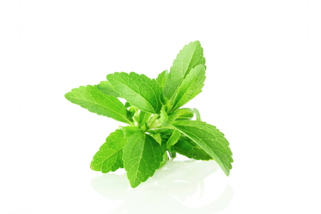 cures: fresh stevia herb closeup in pure white background